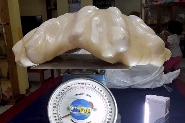 perla-rekord
