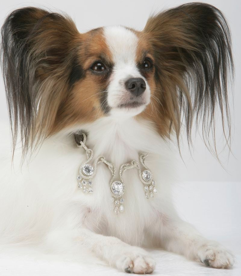 amour-amour-worlds-most-expensive-dog-collar